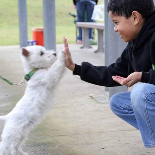 hond trainen met beloning